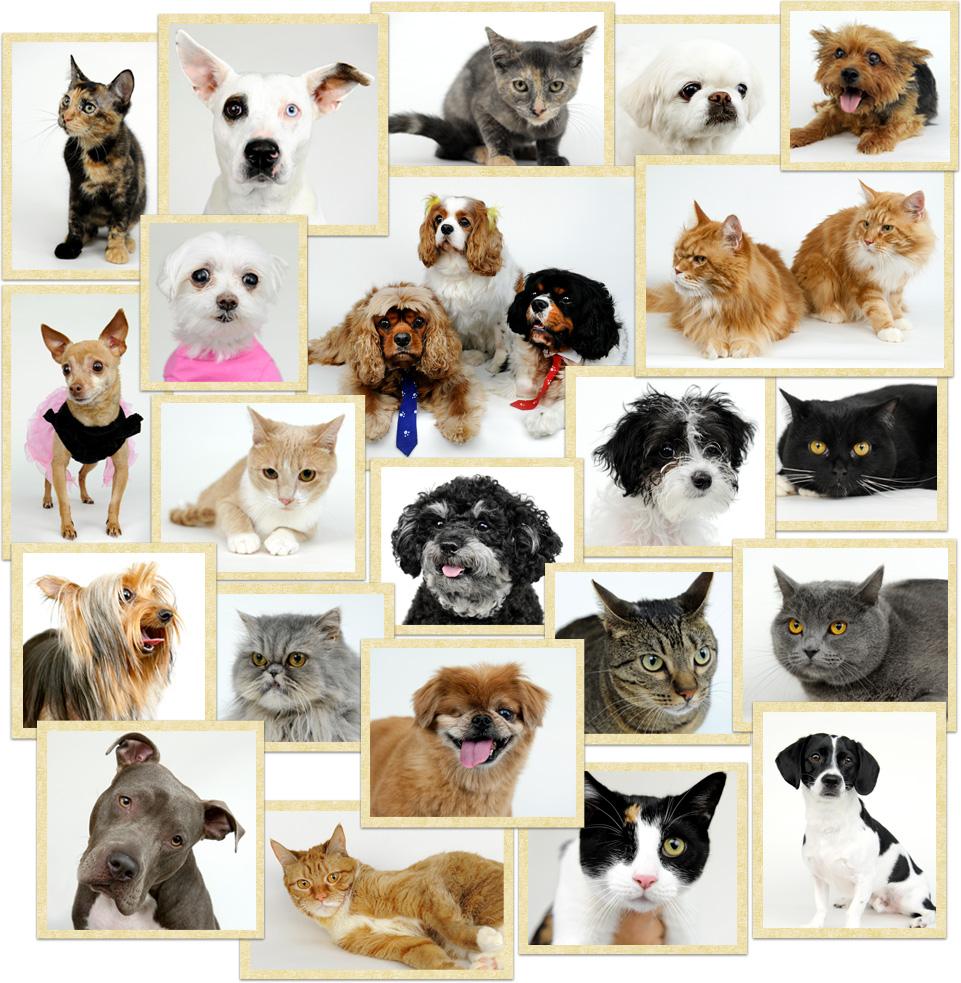 pet care hospital pets world