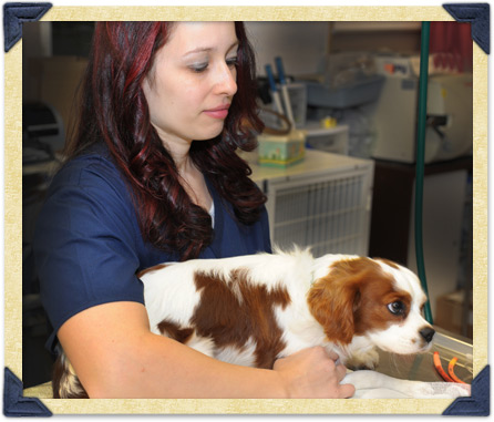 If Your Pet Experiences An Emergency During Our Regular Hours, Please Bring  Him Or Her To The Hospital Immediately.